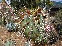 Open Cactus