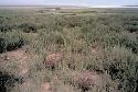 Open Salt marshes