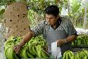Open Fair trade