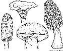 Open Mushroom
