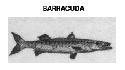 Open Barracudas