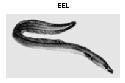 Open eel