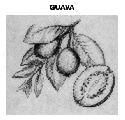 Open Guava