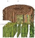 Open Trees