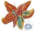 Open Echinodermata