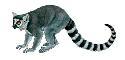 Open lemur