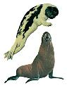 Open seal