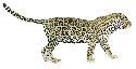 Open jaguar