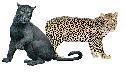 Open Leopard