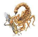 Open scorpion