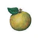 Open Apples