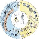 Open Malaria
