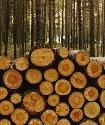 Open Deforestation