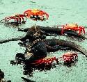 Open Galápagos Islands