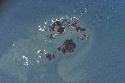 Open Archipelagoes