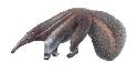 Open Anteaters