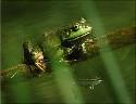 Open Amphibians